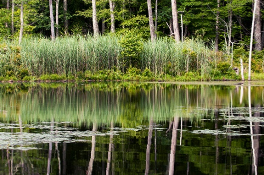 Trees reflect in the water of a swamp at High Point State Park, Montague, NJ, in early July. Dawn J. Benko for Pike and Monroe Life.
