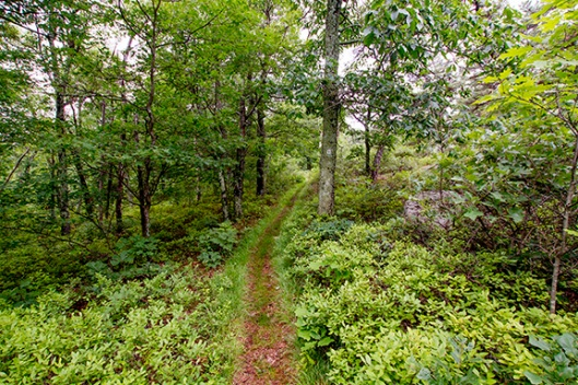 A narrow trail winds its way through High Point State Park, Montague, NJ. Dawn J. Benko for Pike and Monroe Life