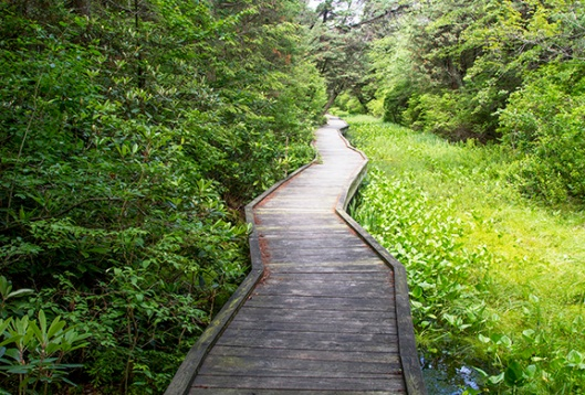 A wooden boardwalk traverses the Cedar Swamp in the Dryden-Kuser Natural Area in High Point State Park, Montague, NJ, in mid-July. Dawn J. Benko for Pike and Monroe Life
